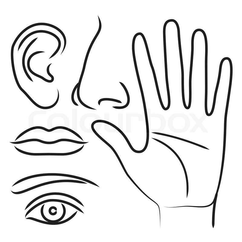 Sensory Organs Hand Nose Ear Mouth And Eye Vector 6804572. Sensory Organs Hand Nose Ear Mouth And Eye Vector 6804572. Worksheet. Sense Of Touch Worksheet At Mspartners.co