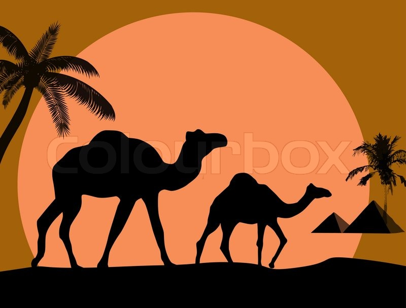 vector illustration of sunset in african desert with camel