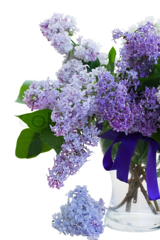 Mixed Lilac In Vase Stock Photo Colourbox