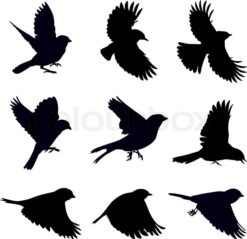 Vector silhouettes of birds, sparrows in different poses ...
