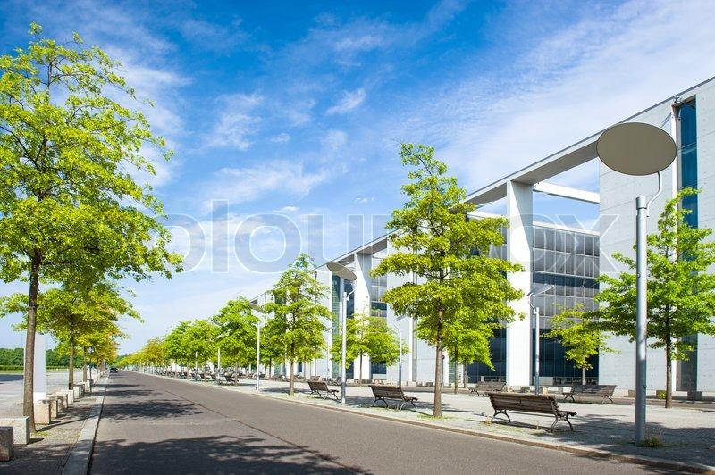 trees in urban landscape