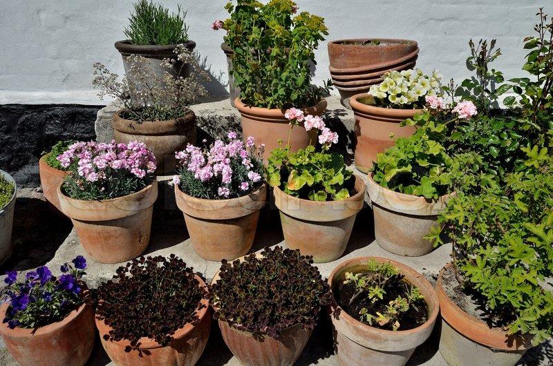 Blomster i krukker på trappe på gårdsplads | stock foto | Colourbox