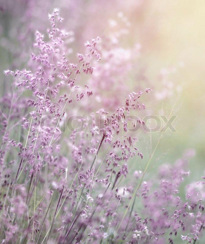Beautiful Fresh Purple Flowers Field, Abstract Dreamy Floral Background,  Sun Light, Soft Focus, Spring Season | Stock Photo | Colourbox