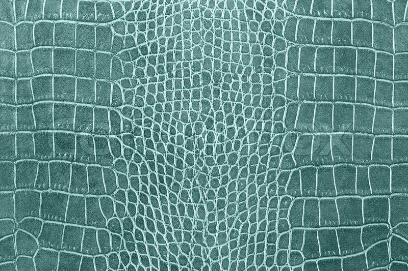 Light Blue Crocodile Skin Texture Stock Photo Colourbox