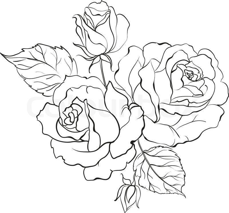Line Drawing Of Rose Plant : Buket af roser stock vektor colourbox