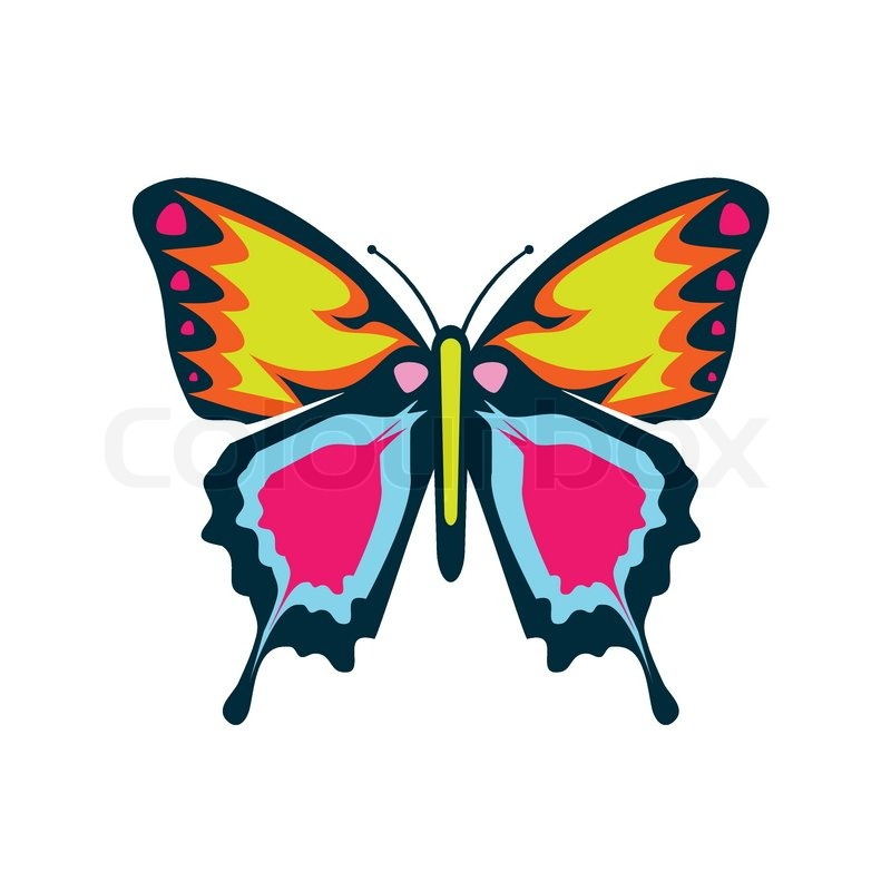 colourful butterfly vector illustration stock vector