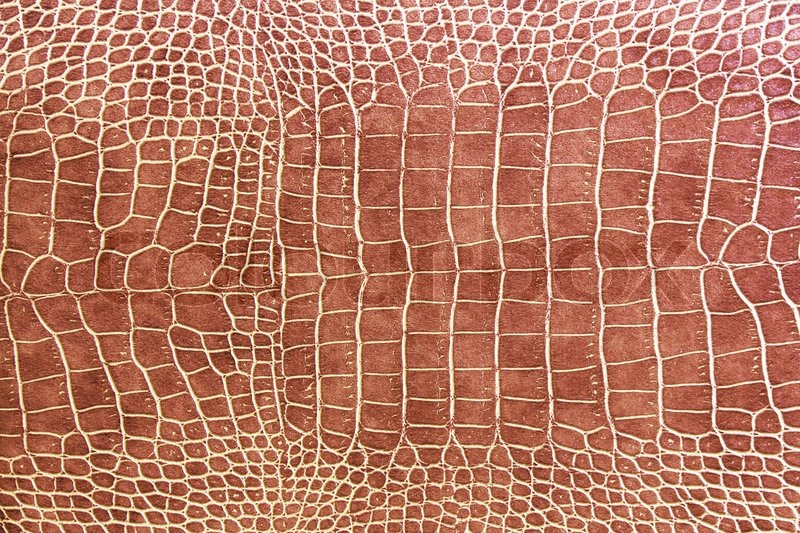 Crocodile Skin Texture Stock Photo Colourbox