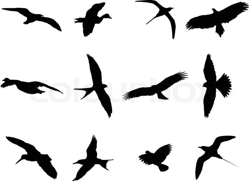 birds silhouette collection vector stock vector colourbox rh colourbox com bird nest silhouette vector bird nest silhouette vector