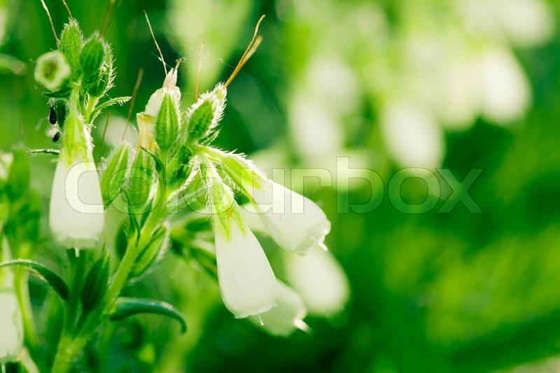 Steppe flower images usseek com