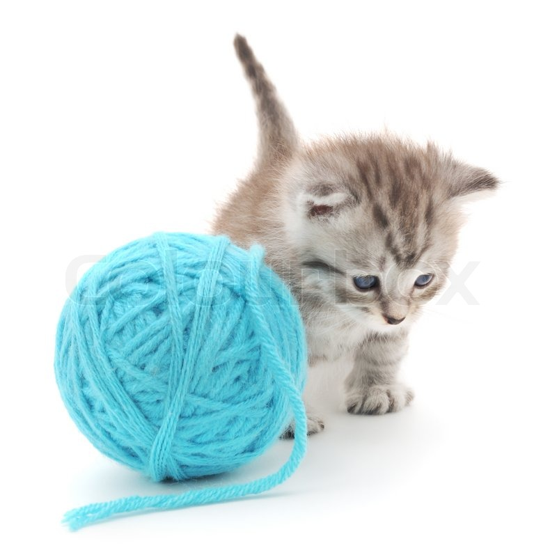 Pictures Of Cats Playing With Yarn