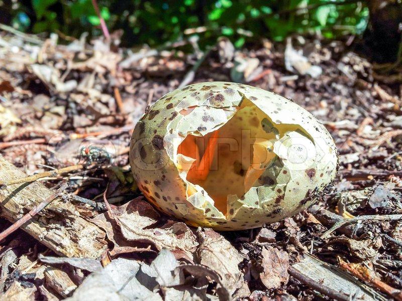 Zerbrochen Vogelei | Stockfoto | Colourbox
