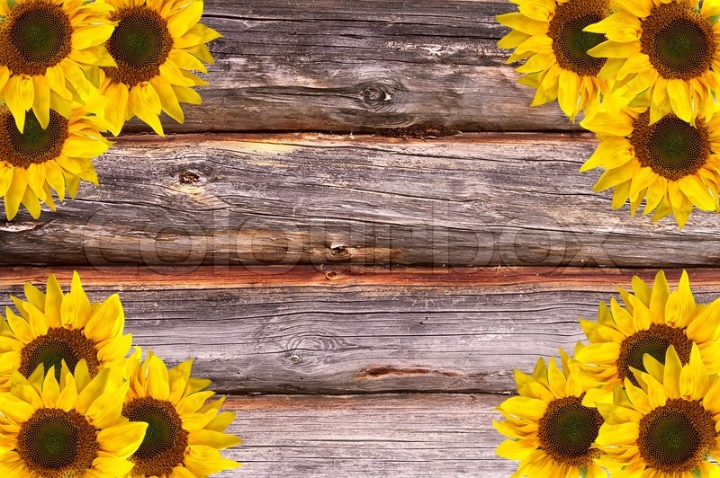 Wooden Lumber Textured Background With Sunflowers Decoration