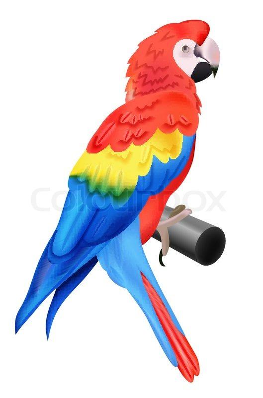 Bunter Papagei Ara Auf Weiem Hintergrund Vektorgrafik Colourbox
