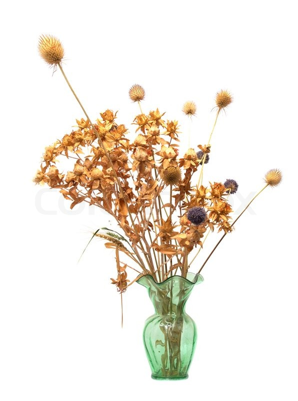 Dried Flowers In A Vase On A White Stock Photo Colourbox