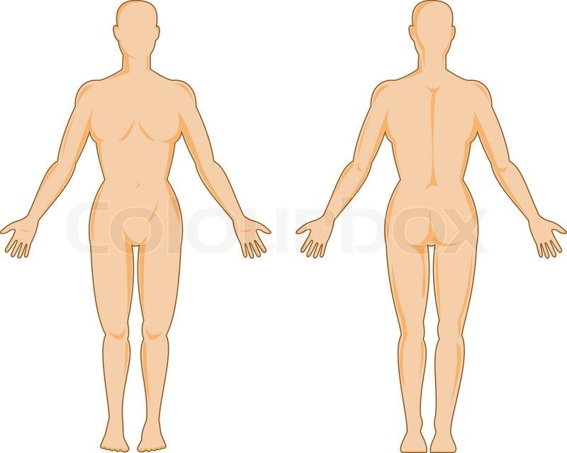 Männlichen menschlichen Anatomie stehend | Vektorgrafik | Colourbox