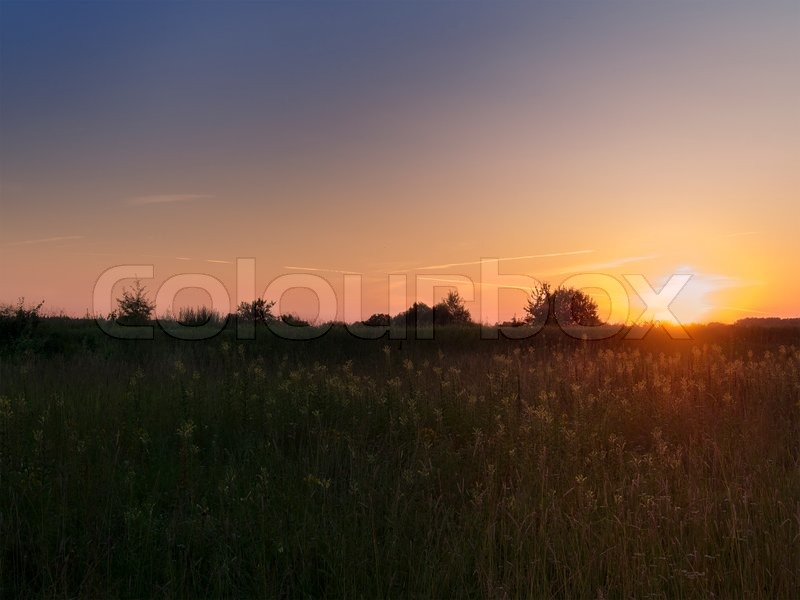 Stock image of 'Summer'