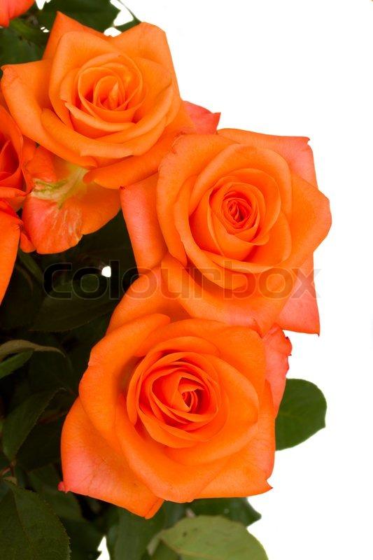 orange rosen hautnah stockfoto colourbox. Black Bedroom Furniture Sets. Home Design Ideas