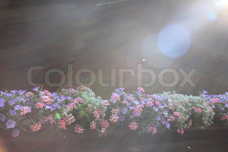 Bluhende Pflanzen Im Blumenkasten Auf Stockfoto Colourbox