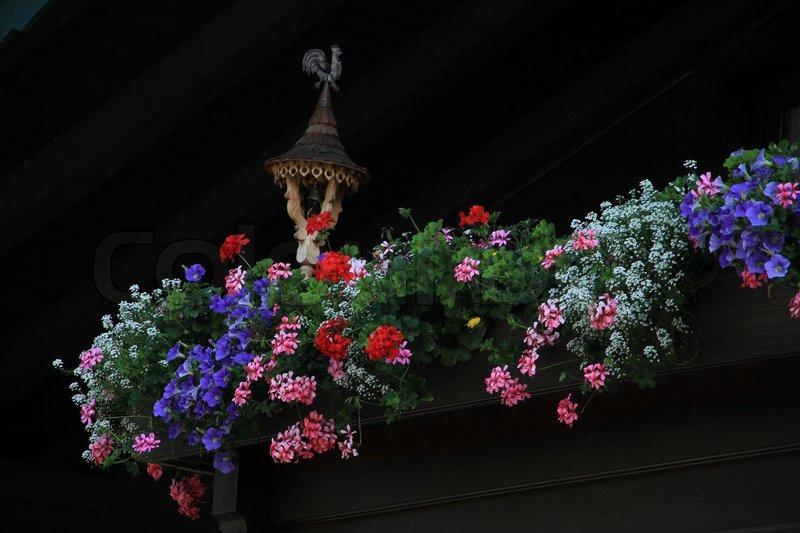bl hende pflanzen wie rosa und roten geranien in farben in blumenkasten auf dem balkon im. Black Bedroom Furniture Sets. Home Design Ideas