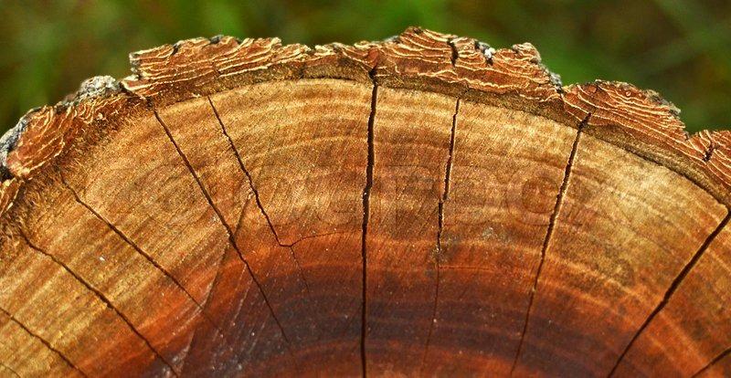 Pflaumenbäume Schneiden der pflaumenbaum schneiden stockfoto colourbox