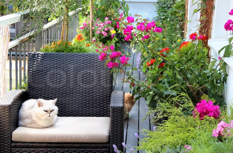 sch ne terrasse mit katzen und viele blumen stockfoto colourbox. Black Bedroom Furniture Sets. Home Design Ideas