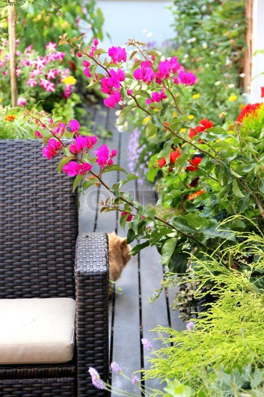 sch ne terrasse mit katzen und viele blumen stock foto colourbox. Black Bedroom Furniture Sets. Home Design Ideas