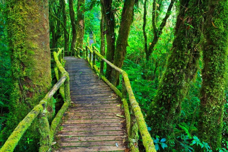 Tropical Rain Forest Path Asia Thailand Stock Photo