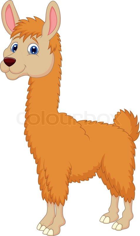 vector illustration of llama cartoon | stock vector | colourbox