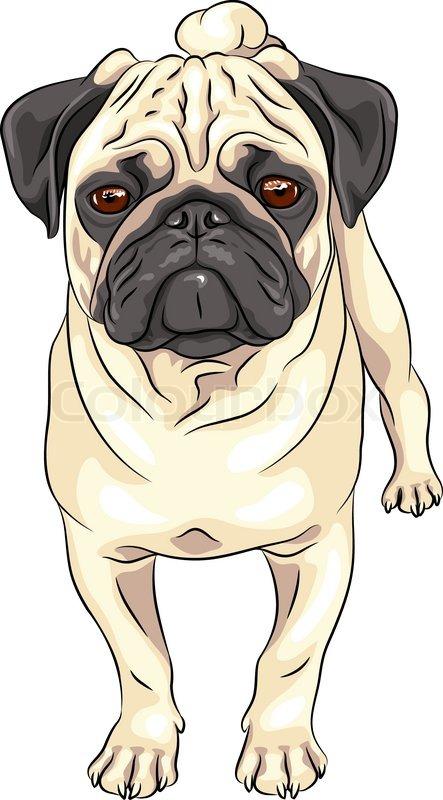 farve sketch sød alvorlige hund fawn   stock vektor