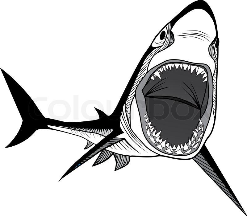 Shark Fish Head Symbol For Mascot Or Emblem Design Logo