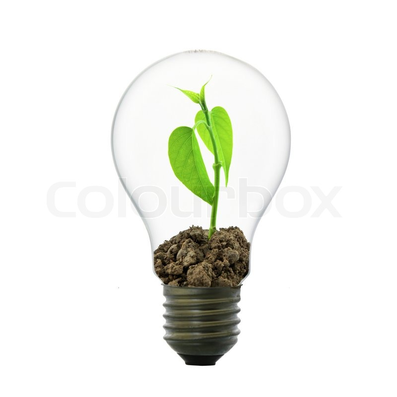 kleine pflanze in gl hbirne stockfoto colourbox. Black Bedroom Furniture Sets. Home Design Ideas
