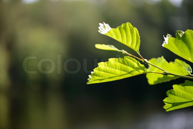 Branch of a tree in the sun, stock photo
