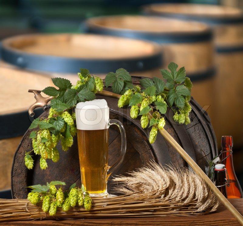 Как выглядит хмель для пива