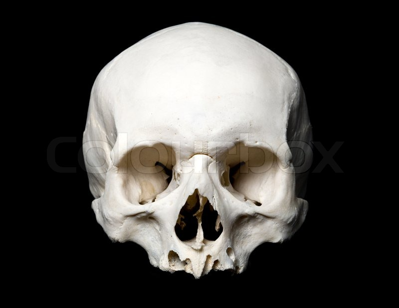 Real human Skull. Upper half. with black background ...