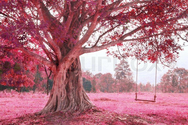 schaukel am baum rosa imagine wald stockfoto colourbox. Black Bedroom Furniture Sets. Home Design Ideas