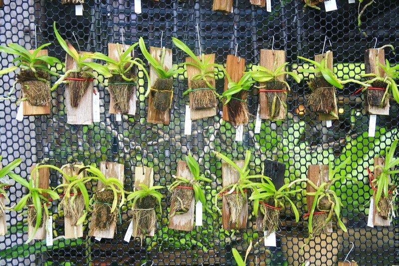 kleine orchideen h ngen net bauernhof in thailand. Black Bedroom Furniture Sets. Home Design Ideas