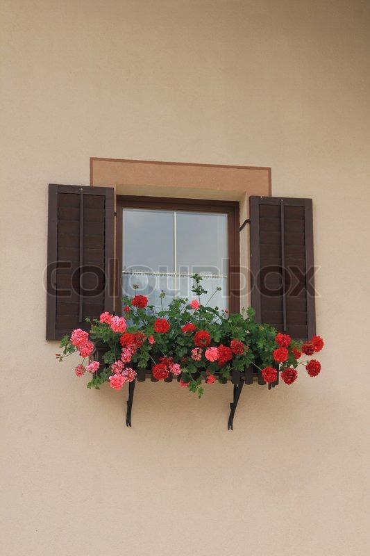 blumenkasten mit roten und rosa geranien und die fensterl den an der bemalten wand des hauses im. Black Bedroom Furniture Sets. Home Design Ideas