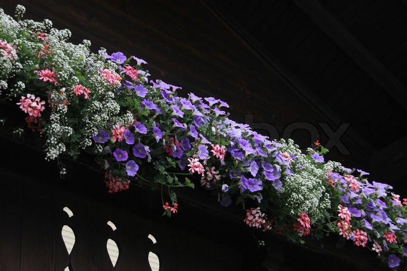 wundersch ne bl hende pflanzen in blumenk sten auf dem balkon des hauses im sommer stockfoto. Black Bedroom Furniture Sets. Home Design Ideas