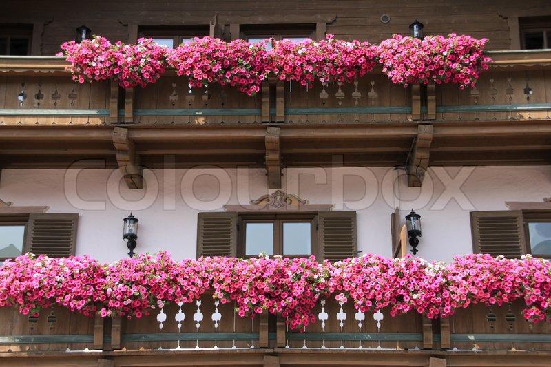 Viele Rosa Blühende Blumen Auf Dem Stock Bild Colourbox