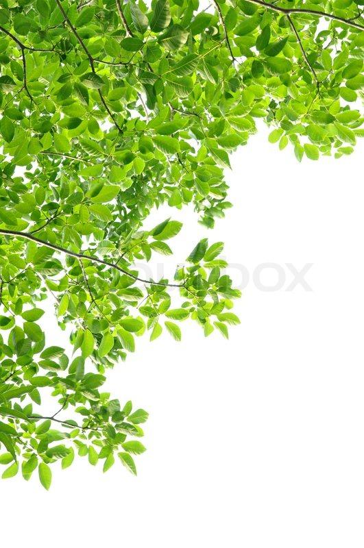 green leaf background border design stock photo