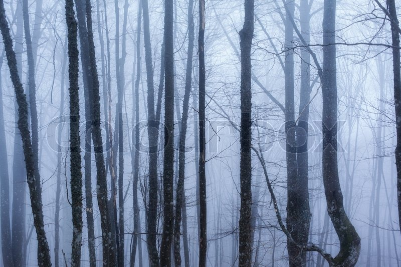 Dark forest with fog and cold light , stock photo