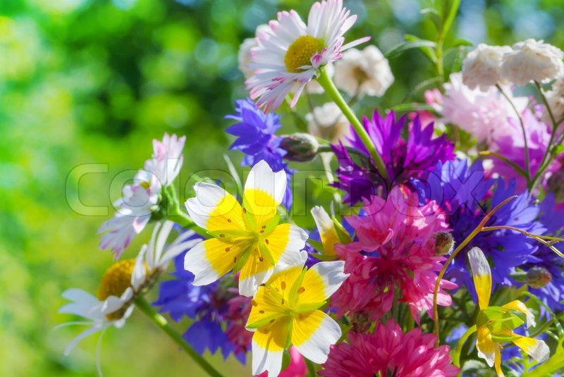 Colorful meadow flowers summer bouquet | Stock Photo | Colourbox