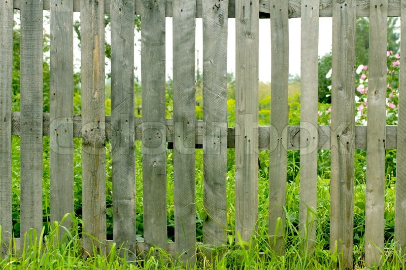 Fresh Spring Green Grass And Leaf Plant Over Wood Fence Background | Stock  Photo | Colourbox