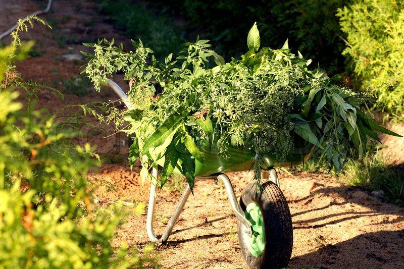 Green wheelbarrow standing in garden full of weed Stock Photo