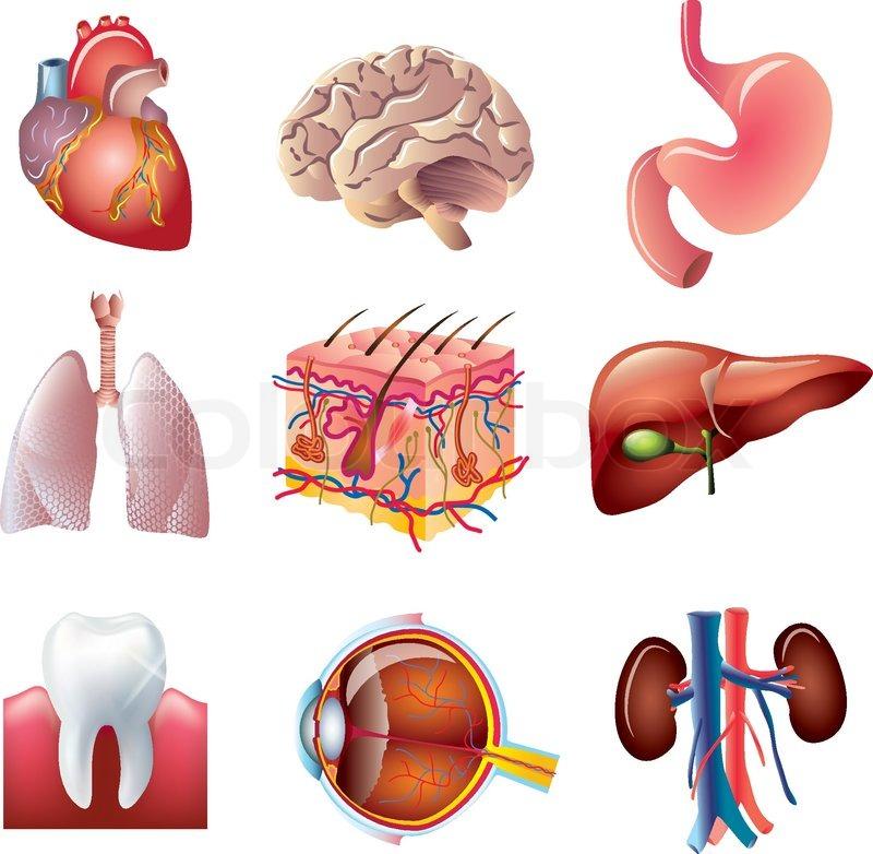 Menschliche Körperteile vector Gruppe | Vektorgrafik | Colourbox