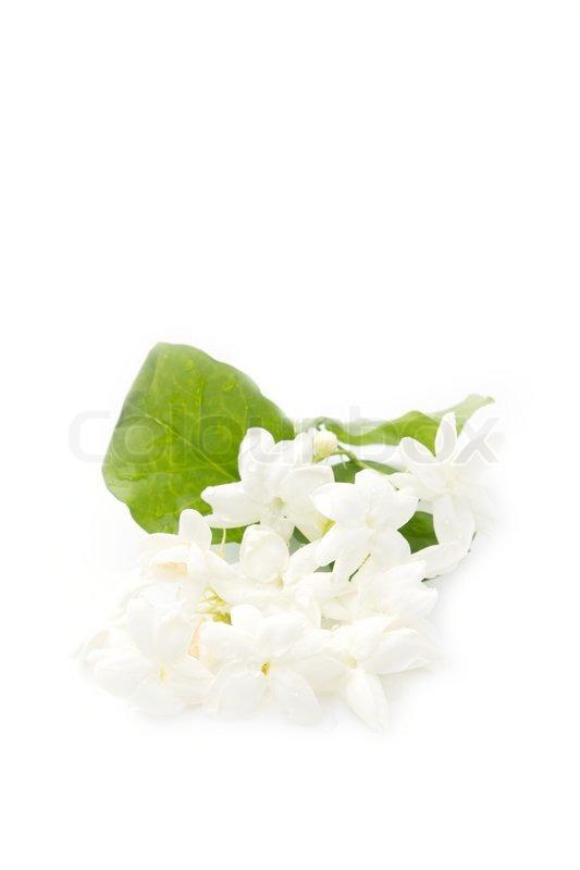 Jasmine White Flower On Background