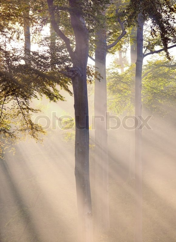 Misty atmosphere and sunbeam in the forest, stock photo