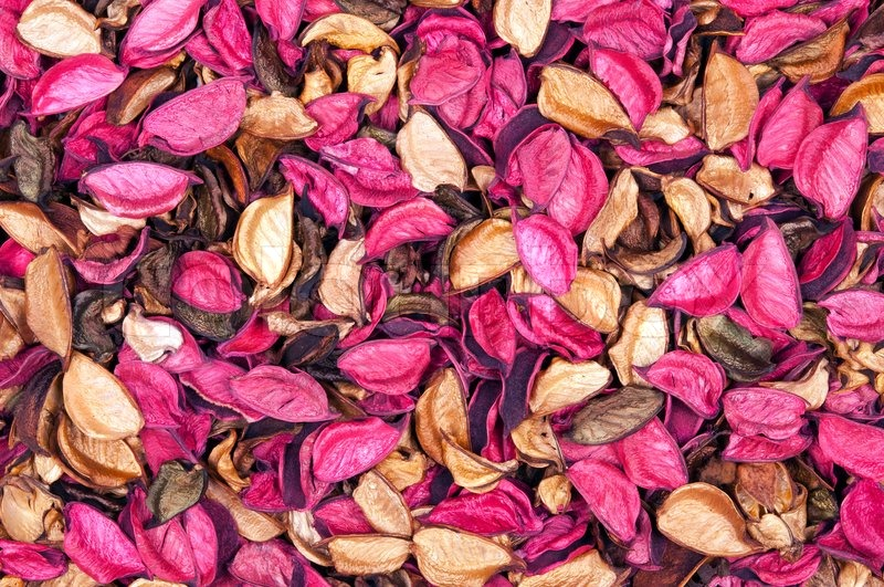 Beautiful background of dry flowers, stock photo