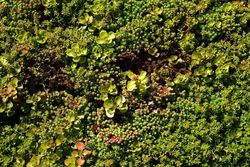 Green Wall Closeup