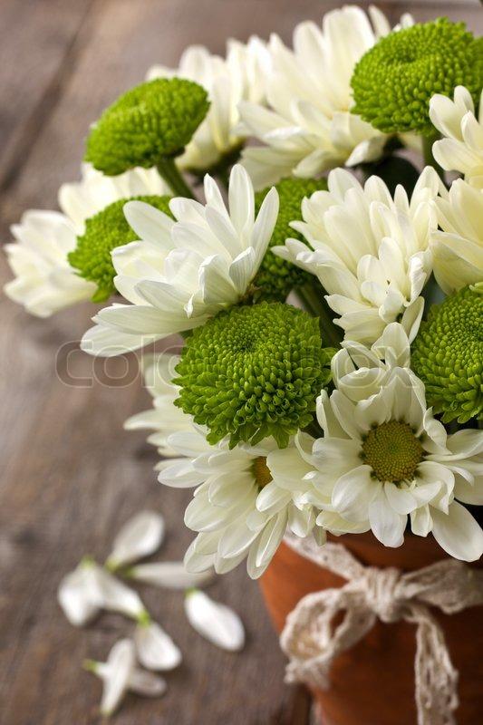Сонник букет хризантемы